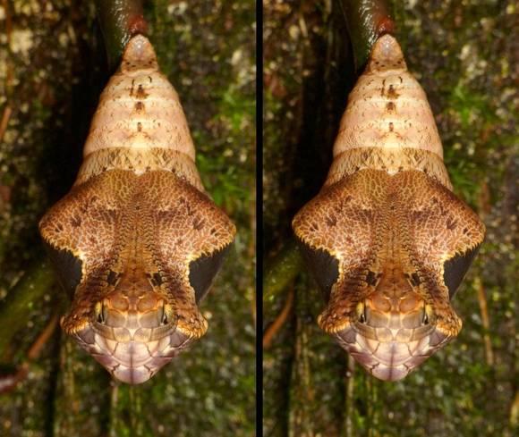 Cel mai tare mimetism: nu ghicești ce este acest animal nici dintr-o mie de încercări! (Galerie Foto)