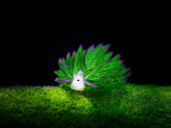 Oi de mare? Cum arata micuțele creature și de ce sunt deosebite (Galerie Foto)
