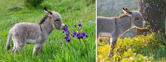 Cele mai drăguţe imagini dintotdeauna: animale mirosind flori (Galerie foto)