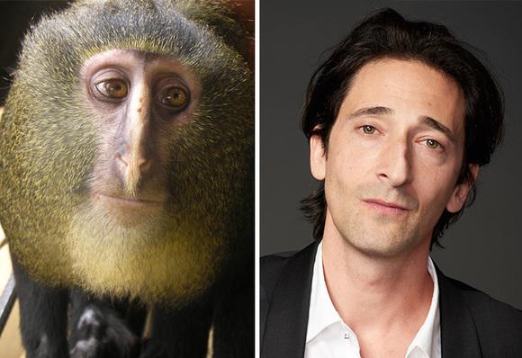 13 celebrităţi care şi-au găsit sosiile în animale (Galerie Foto)