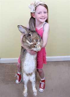 Se caută părinţi adoptivi pentru un iepure gigant