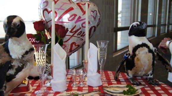 Un cuplu de pinguini a sărbătorit 22 de ani de relaţie (Galerie Foto)