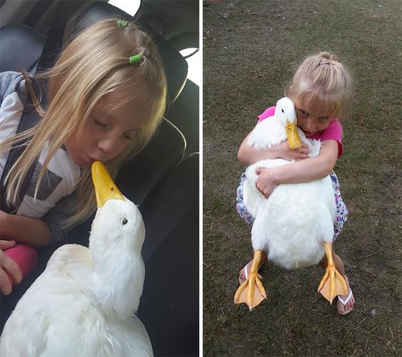 Prietenie uimitoare dintre o fetiță și o rățușcă. Fetele sunt de nedespărțit (Galerie Foto)
