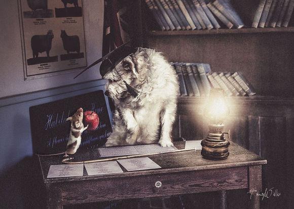 Cele mai tari fotografii suprarealiste cu animale, realizate în Photoshop (Galerie foto)