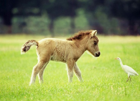 Descoperă cei mai frumoși mini-cai din lume. Sunt mai drăgălași decât jucăriile de pluș (Galerie foto)