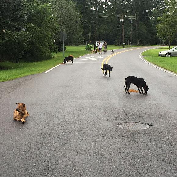 Imagini emoționante, după ploile de proporții din Louisiana. Oamenii refuză să își părăsească animalele (Galerie Foto)