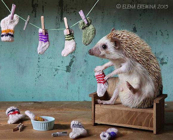 S-a aflat: aricii duc o viață secretă (Galerie Foto)