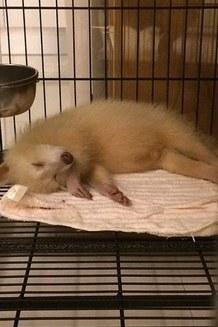 Cum arată cea mai haioasă frizură a unui raton (Galerie Foto)