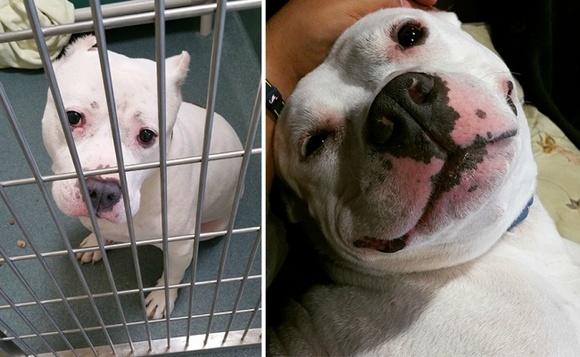 Înainte şi după adopţie. 15 fotografii emoţionante, care te vor face să zâmbeşti din toată inima (Galerie Foto)
