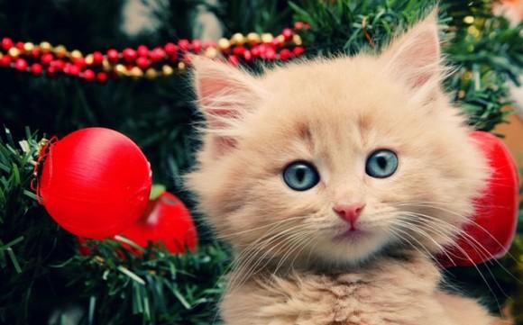 Top 20 cele mai amuzante imagini cu animale puţin cam plictisite de Crăciun (Galerie Foto)