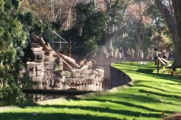 Sfâşiat de trei lei, după ce a intrat intenţionat în cuşca lor