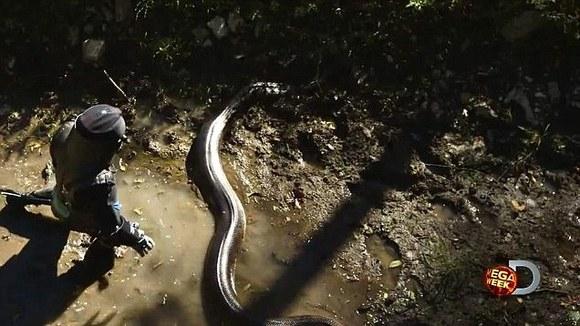 A fost difuzat! Ce s-a întâmplat cu naturalistul care s-a lăsat înghiţit de anaconda (Galerie Foto)