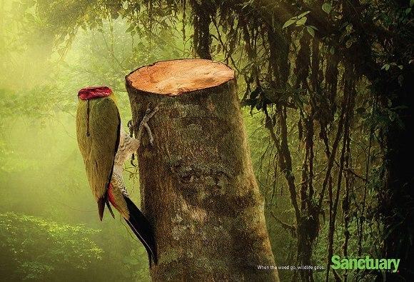 Efectele despăduririlor, în imagini şocante (Galerie Foto)