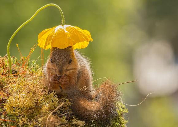 Omul care trăiește din fotografiile cu veverițe (Galerie foto superbă)