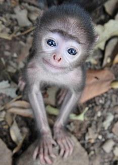 Cei mai adorabili pui de maimuţă din lume sunt chiar aici (Galerie Foto)