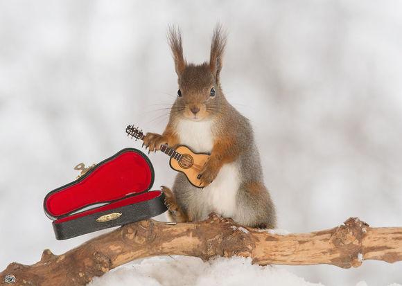 Cele mai talentate veveriţe le predau copiilor alfabetul (Galerie Foto)