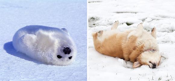 15 fotografii super drăgălașe, care ne dovedesc că focile seamănă perfect cu niște cățeluși simpatici (Galerie Foto)
