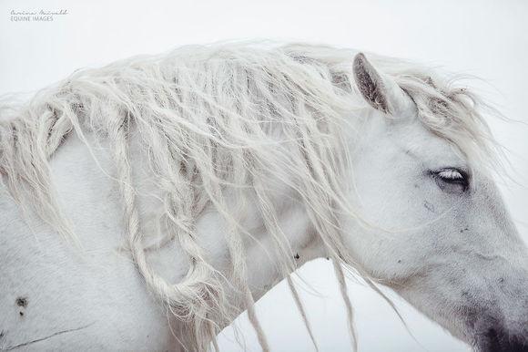 """Cai în imagini superbe: """"am fotografiat cai sălbatici și mi-am găsit liniștea"""" (Galerie foto)"""