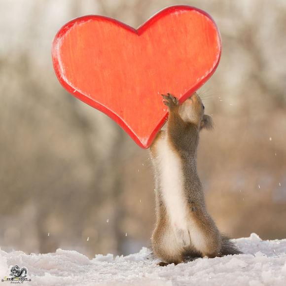 Cum au petrecut veveriţele sălbatice Ziua Îndrăgostiţilor (Galerie foto)