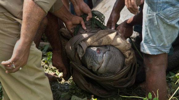 Strategie controversată: 50 de braconieri au fost împuşcaţi până acum, pentru a proteja rinocerii (Galerie foto)