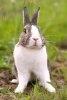 Plante si alimente proaspete pentru iepuri