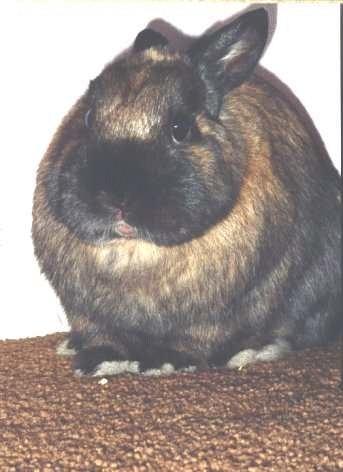 Efectele caldurii asupra iepurilor de casa