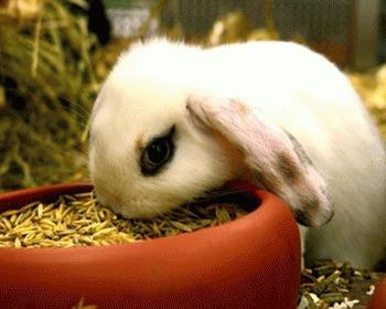 Hrana rea pentru iepuri