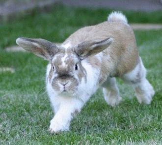 Sterilizarea iepurilor - o alegere inteleapta