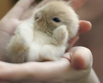 Ingrijirea de baza a iepurilor de companie (III)