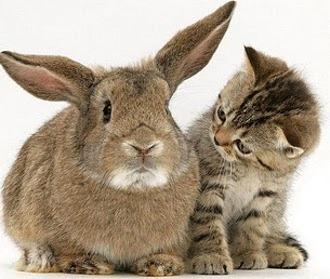 Se pot intelege pisicile cu rozatoarele de companie?!