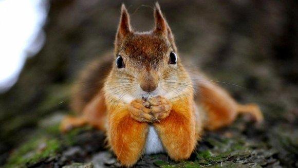 Curiozități veverițe: 10 lucruri interesante despre veveriţe