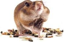 De ce sa ne luam un hamster