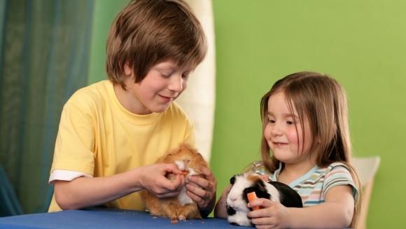 Cum să îți convingi părinții să îți cumpere un hamster