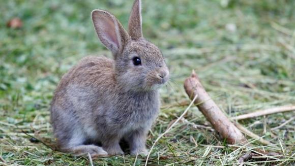 Cât trăiește un iepure domestic? Cum îi poți prelungi viața?