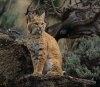 Inca un semnal de alarma pentru speciile pe cale de disparitie