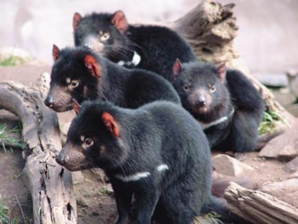5.487 de mamifere sunt pe cale de disparitie