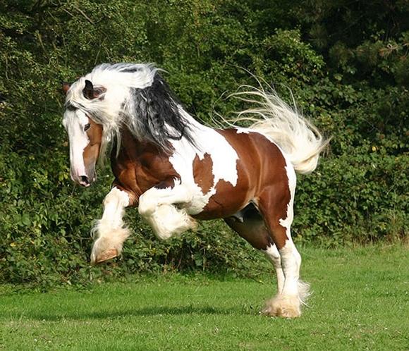 ponei mei trebuie să piardă în greutate)