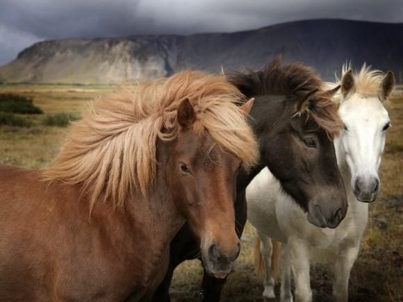 ponei trebuie să piardă în greutate)