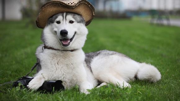 Must Love Dogs Wallpaper : cum facem poze reusite animalelor de companie - zooland.ro