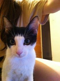 Anunțuri animale – cereri și oferte adopție și cumpărare