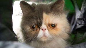 Cea mai suparată pisică din lume!