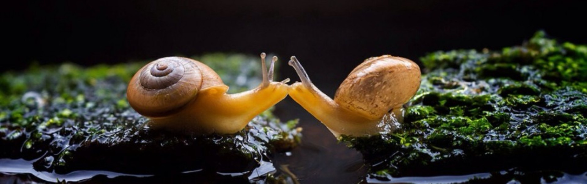 Dragostea pluteşte în aer - cele mai dulci sărutări ale animalelor - Galerie Foto