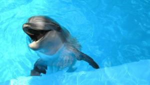 Delfinul care râde în hohote! Adorabil!