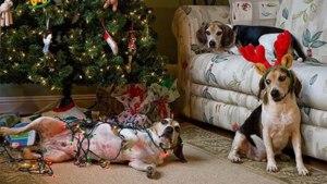 Pomi de Crăciun? Despre ce vorbim? Îi distrugem noi pe toți!!!
