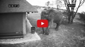 Mai educat decât unii dintre noi?! Ce face un elefant când găseşte gunoaie pe jos?
