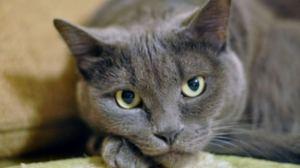 A intrat în comă diabetică. Ce a făcut pisica lui este de-a dreptul fascinant