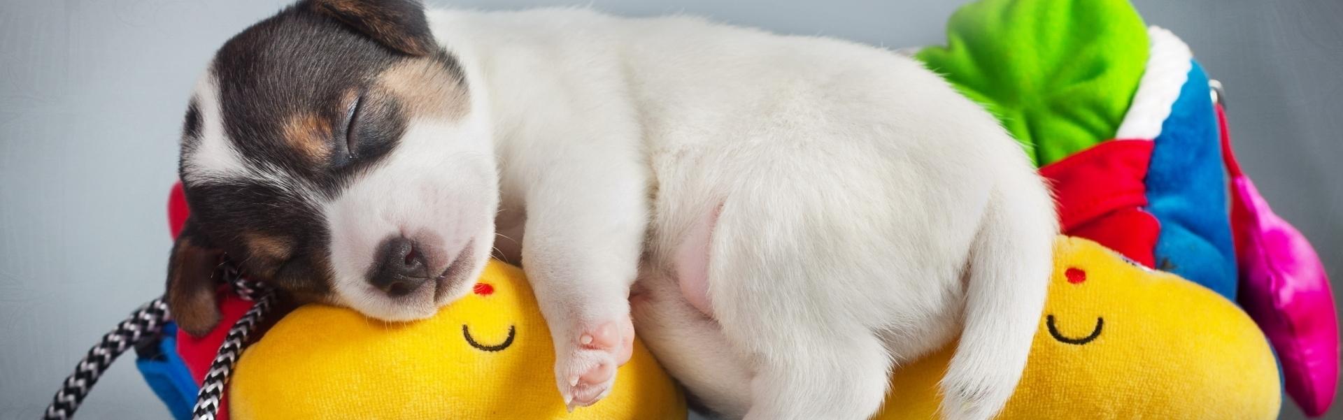 Cățelușii dorm
