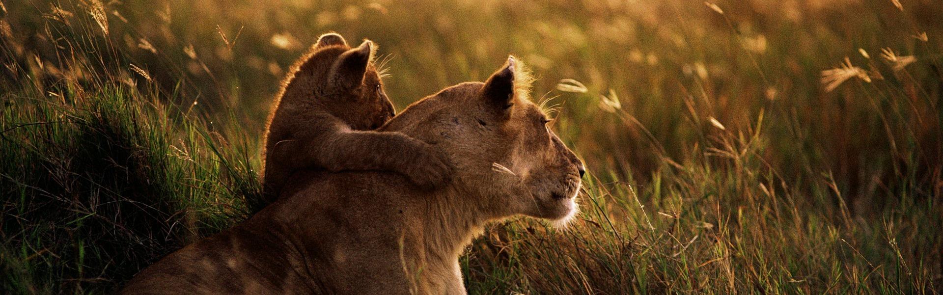 15 fotografii care dovedesc că nimic nu este mai puternic decât dragostea părinţilor pentru puii lor