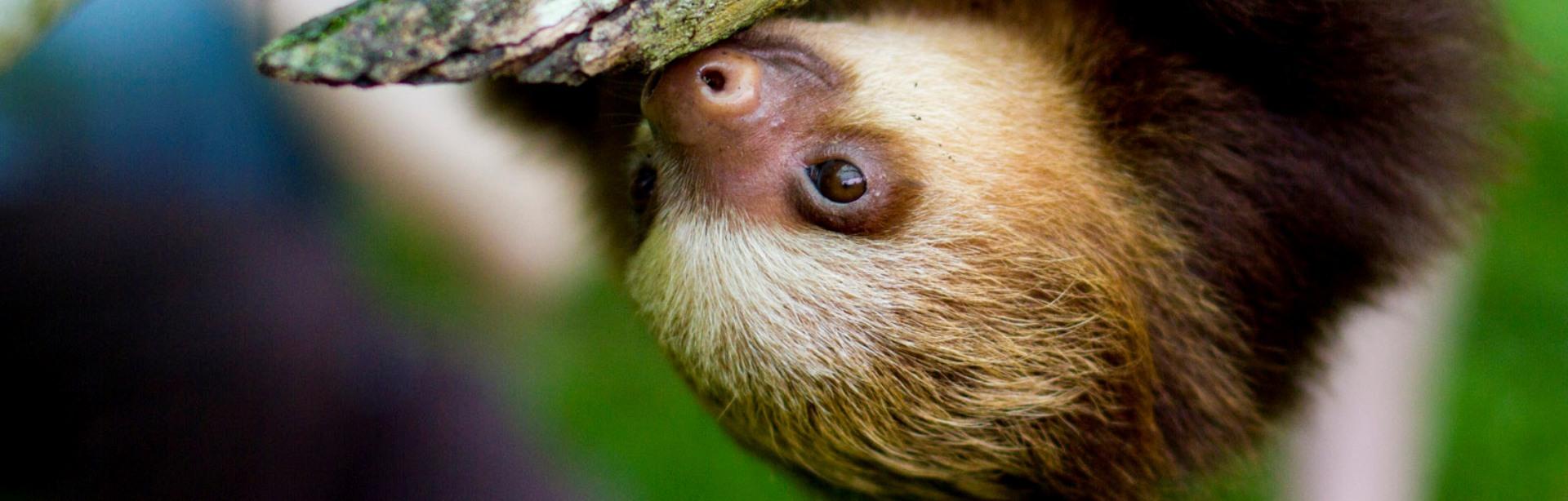 12 motive pentru care leneșii sunt absolut adorabili