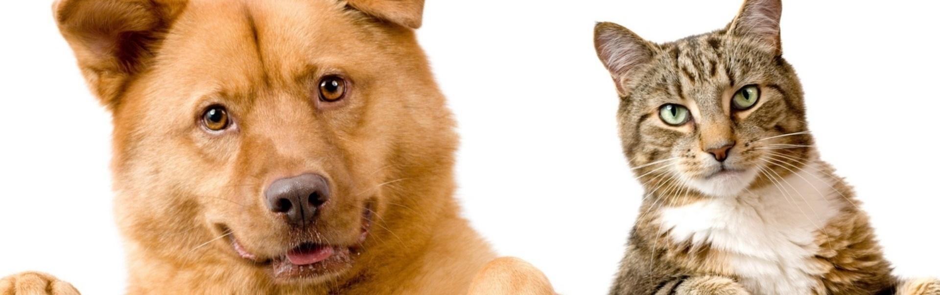 13 pisici care iubesc să scoată câinii din pepeni